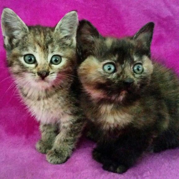 #kittens #cats #pets #love #home
