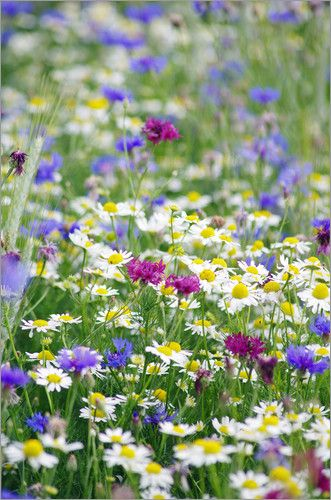 Sommerwiese. There is nothing quite like being surrounded by a field of flowers