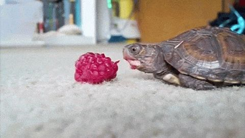Happy World Turtle Day! | IFLScience ~ May 23 is World Turtle Day, celebrating the tortoise and the turtle. Started by the American Tortoise Rescue (ATR) in 2000, the annually celebrated day shines a spotlight on care.