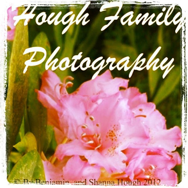© Hough Family Photography 2013 , all rights reserved  Some more flowers that grow in out yard