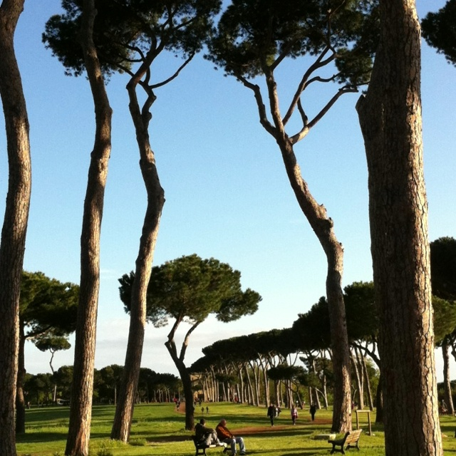 96 Best Images About The Pines Of Rome On Pinterest