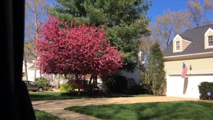Primavera 2015 em Asheville, Carolina do Norte, EUA