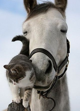 Country Living ~ Horse & Cat Friends