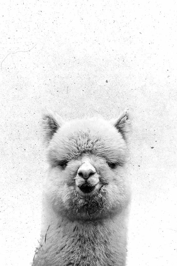 Alpaca Art Print ❤ Nursery Decor | #KidsTrends by #PrintsProject