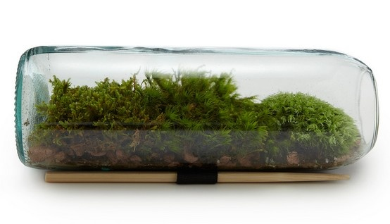two great things combined: moss bottle terrarium. uncommon goods.