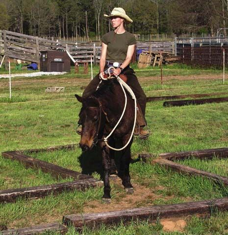 Confidence course maze improves horse turns, hindquarter control and precise movement and control