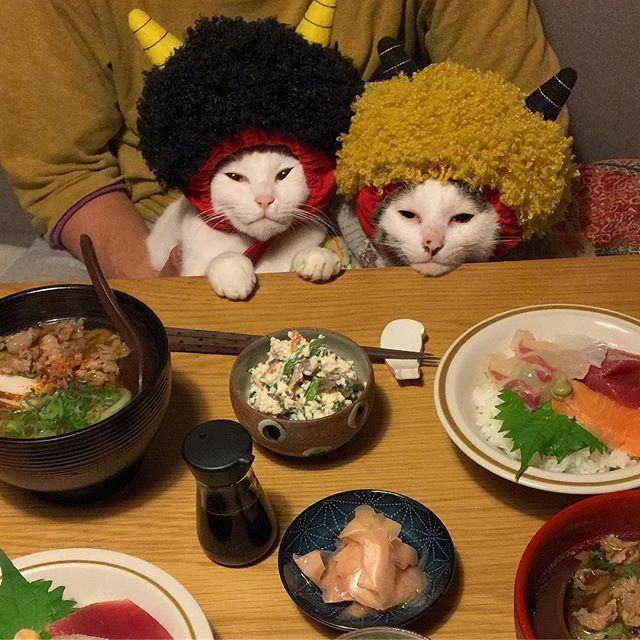 ヤル気のない人ら…w 2枚撮って迷って採用されんかった方。 ハッチャンはどっちも一緒w #八おこめ #ねこ部 #cat #ねこ #八おこめ食べ物 #節分 #海鮮丼 #赤鬼 #八おこめズラ