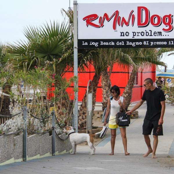 Rimini Dog No Problem Con Immagini Spiaggia Foto Rimini