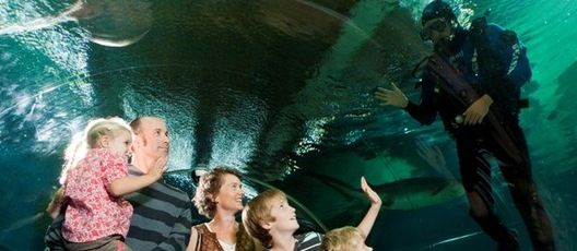 Swim with the Sharks at the National Aquarium of New Zealand