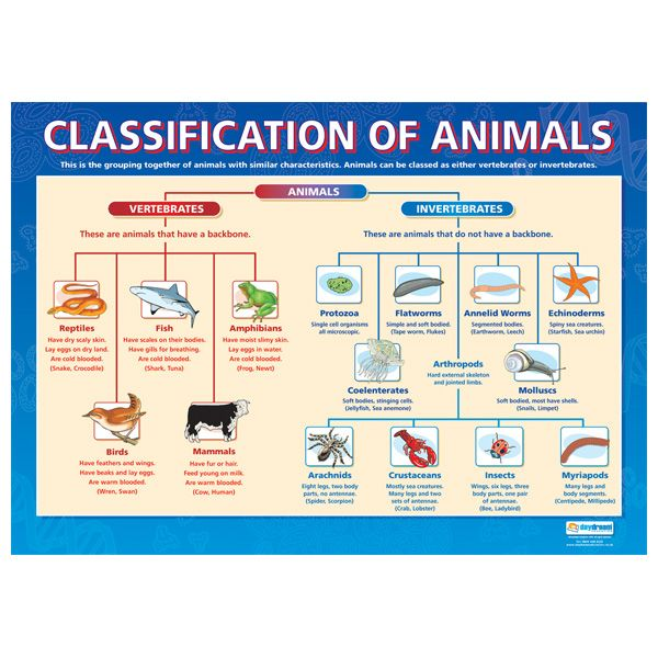classification system chart | Feb. 25: Animal Classification Activity & BBC's Planet Earth (Jungles ...