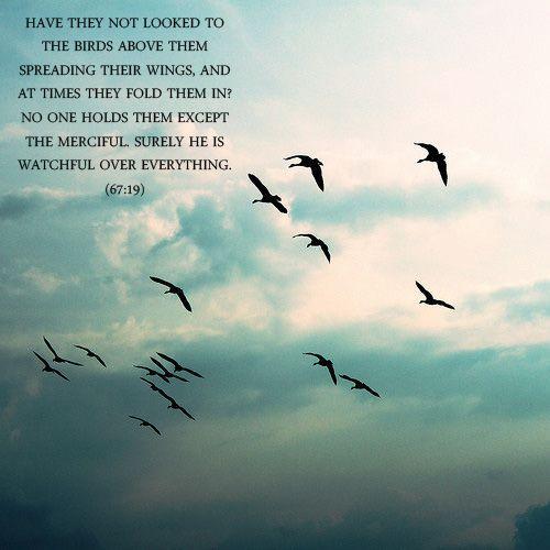 أَوَلَمْ يَرَوْا إِلَى الطَّيْرِ فَوْقَهُمْ صَافَّاتٍ وَيَقْبِضْنَ ۚ مَا يُمْسِكُهُنَّ إِلَّا الرَّحْمَـٰنُ ۚ إِنَّهُ بِكُلِّ شَيْءٍ بَصِيرٌ ﴿١٩﴾ http://tanzil.net/#67:19