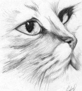 Dibujo de un gato a lápiz