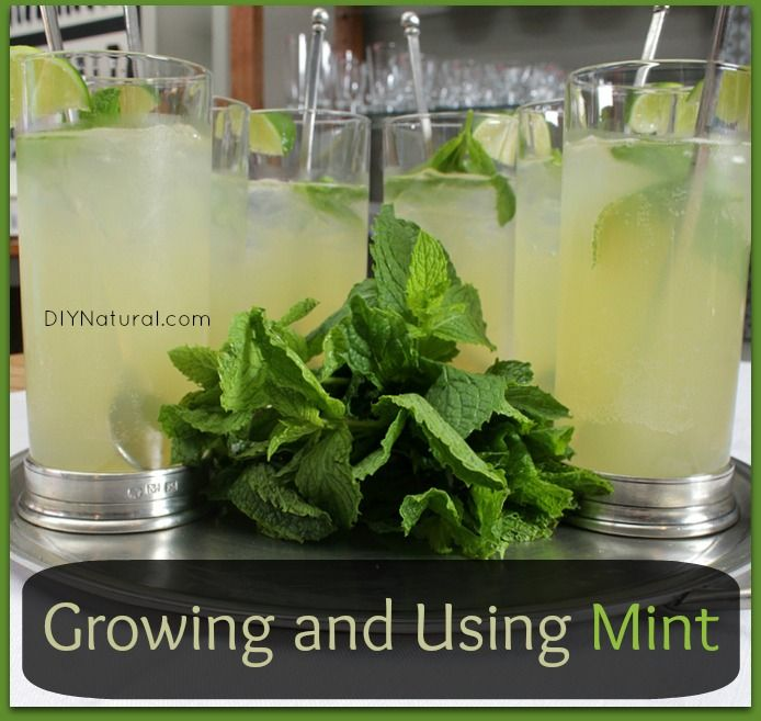 how to grow mint in water