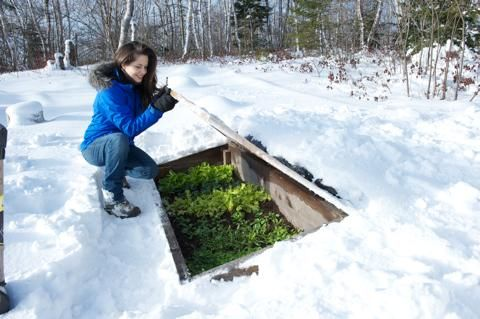 A cold frame extends the growing season and turns your garden into a year round vegetable factory. Read more: http://www.motherearthnews.com/organic-gardening/the-amazing-cold-frame.aspx#ixzz2SGnXqAbW