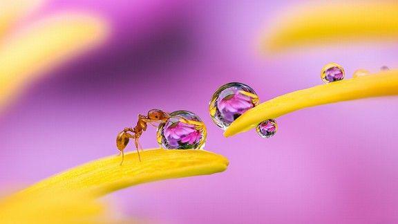 Karınca #wallpaper #karınca #ant #macro