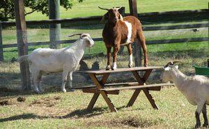 Serendipity Farm Animal Centre Upper Brookfield