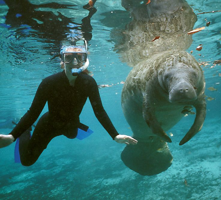 Watch as a breathtaking herd of gentle manatees greet vacationers | Roadtrippers