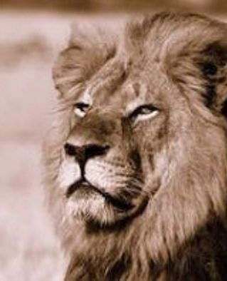 Despite the uproar in America & the rest of the first world about the death of Cecil the Lion at the hands of a Minnesota dentist, & despite numerous press reports describing Cecil as a national hero, Zimbabweans don't appear to actually care about Cecil or any of their endangered lions. The distinction is both that many Americans are concerned about endangerment to the lion species, but because (we) believe that MURDER should not be a pleasure or a sport.