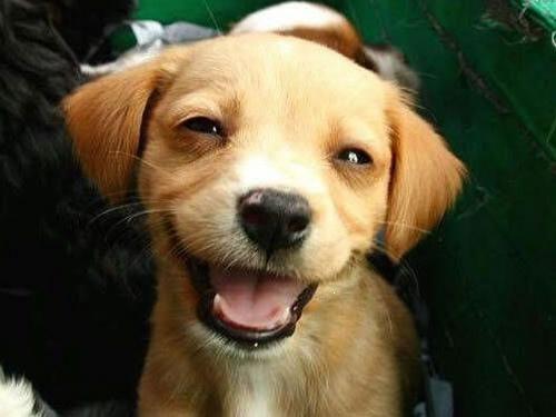 Et si on vous disait qu'un chien avait le même sourire Colgate que Karine Ferri ?
