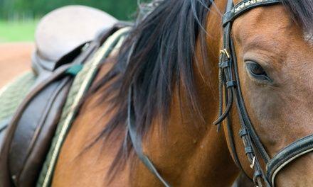Ferme Equestre Faraon à Gignac-la-Nerthe : Balade à cheval: #GIGNAC-LA-NERTHE En promo à 35.00€ En promotion à 35.00€. Une balade à cheval…