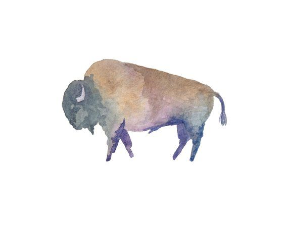 Buffalo North American Bison Watercolor Illustration Animal