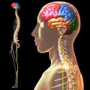 A Mama's Story: Is Your Head on Straight? {An Intro to Upper Cervical Chiropractic}