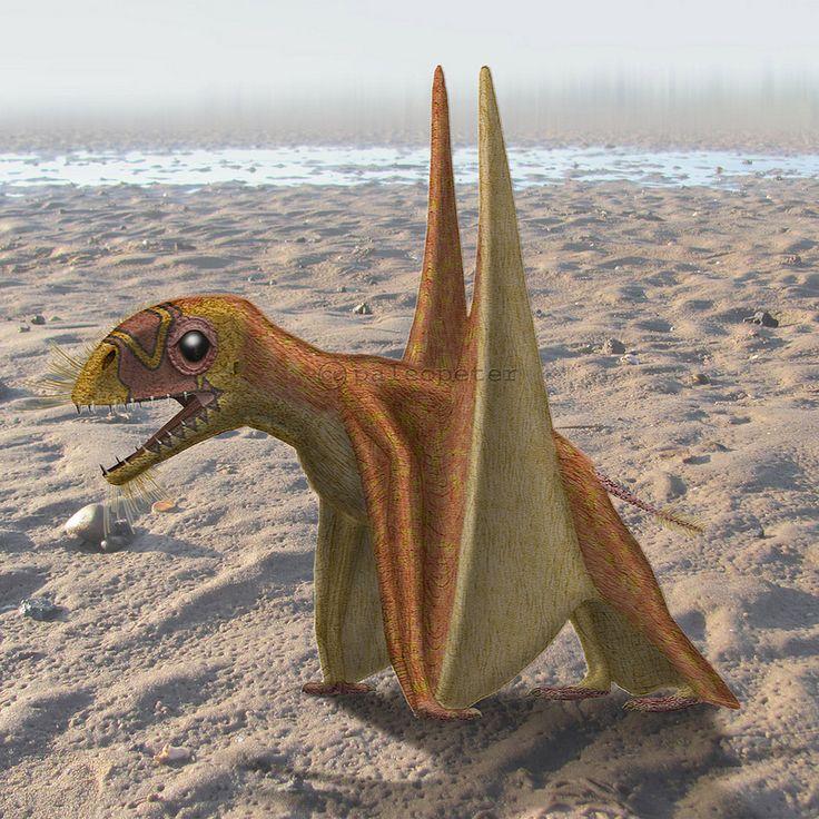 Anurognathus Genus, Museu