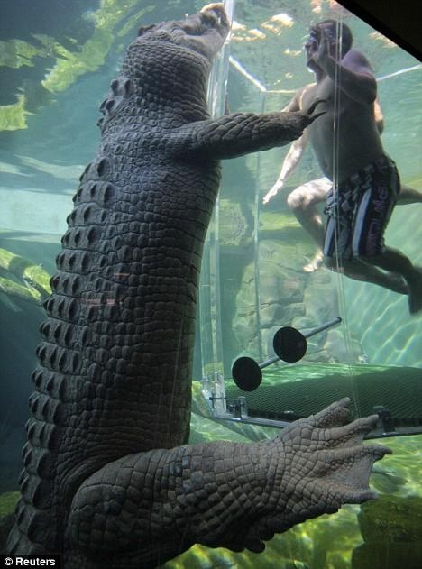 crocosaurus cove theme park, Darwin, Australia - maybe I will get the other half to do this next time we're home :)