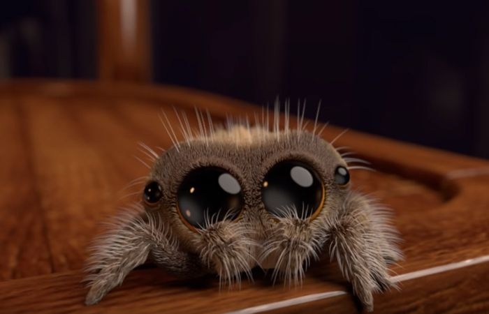 Meet Lucas, The Most Adorable Spider That Will Cure Your Arachnophobia