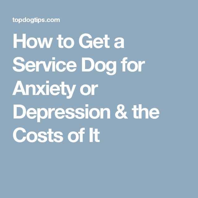 Depression And Anxiety Service Dog Training