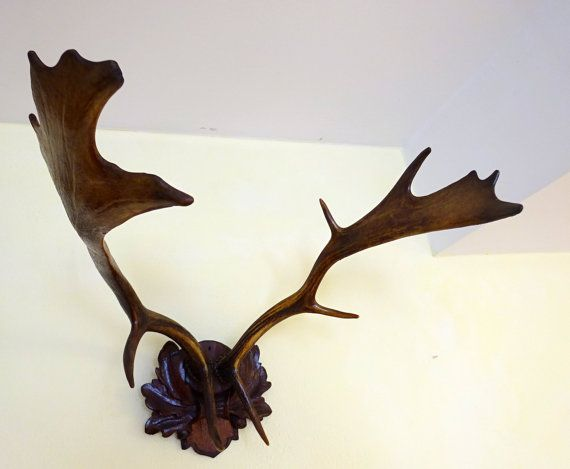 ITEM: Fallow DEER Antlers, Mounted on old wooden plaque. These stunning, quite large Antlers came from a Hunter cottage near the High Tatras. Had
