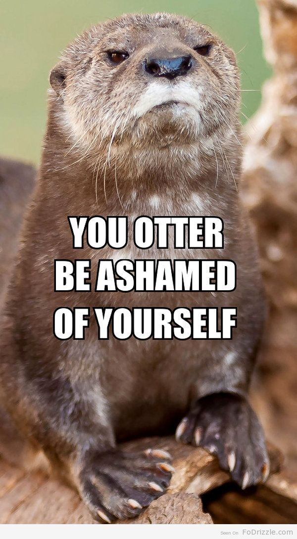 : Animals, Stuff, Disapproving Otter, Otters, Humor, Funnies, Things, Funny Animal