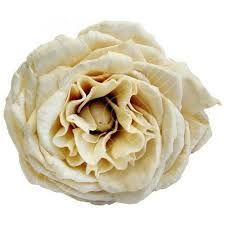 Image result for camellia wedding bouquet
