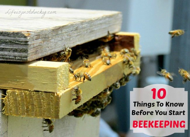 So you want to start raising bees. Here are 10 things to know before you begin. Like how much time it will take and how much your new apiary will cost. Before you get your first bee hive, check out this list. #10 is really something to think about.