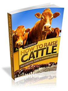 business plan for farming and raising livestock for beginners