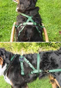 siwash dog harness variations - Google Search