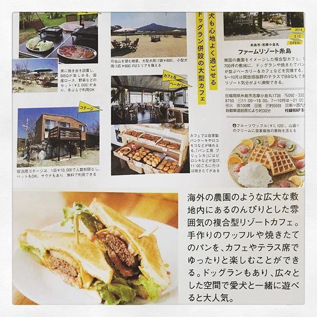 こんにちは🤗 今回、シティ情報ふくおか、福岡Walkerの『とっても新しい糸島案内』でご紹介させていただきました🎉 是非みなさんもお買い求めのうえご覧ください📓 また、ゴールデンウィークも休まず営業しておりますのでご来店下さい😊 #farmresort糸島 #ファームリゾート糸島 #ドックラン #BBQ#バーベキュー#japan#fukuoka#糸島#ランチ#lunch#飛行犬#犬#愛犬#dog#ペット#飛行犬撮影会#飛行犬部#飛行犬official photo book#オフ会#大型犬#小型犬#的場信幸#笑神様#日本テレビ#糸島カフェ#ドライブ#シティ情報ふくおか#福岡walker #善甫文治