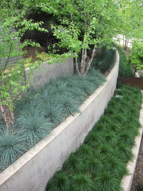 This retaining wall uses repetition of grass plantings - blue fescue and mondo grass