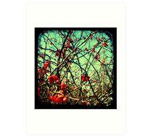 Blossom Frenzy - TTV Art Print