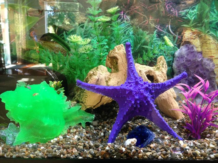 check out our Facebook page at calypso aquarium maintenance also on twitter @CalypsoAquarium made for the kid in all of us!
