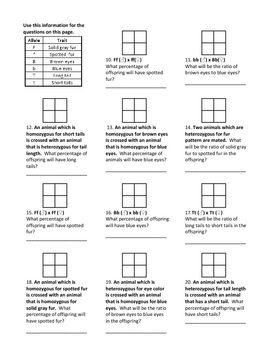 Best 20+ Punnett Square Activity ideas on Pinterest | Dna genetics ...