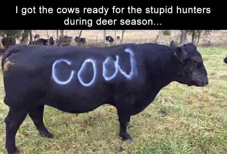 cows prep for hunting season