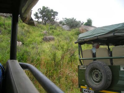 Kruger National Park Calendar - February   #travel #tourism #southafrica #kruger #safari