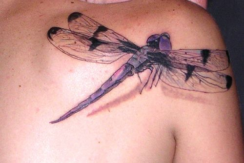 There are three basic symbolic meanings attached with a dragonfly. All those three dragonfly tattoo meanings originate from its short life. http://tattootats.com/dragonfly-tattoo-meanings/