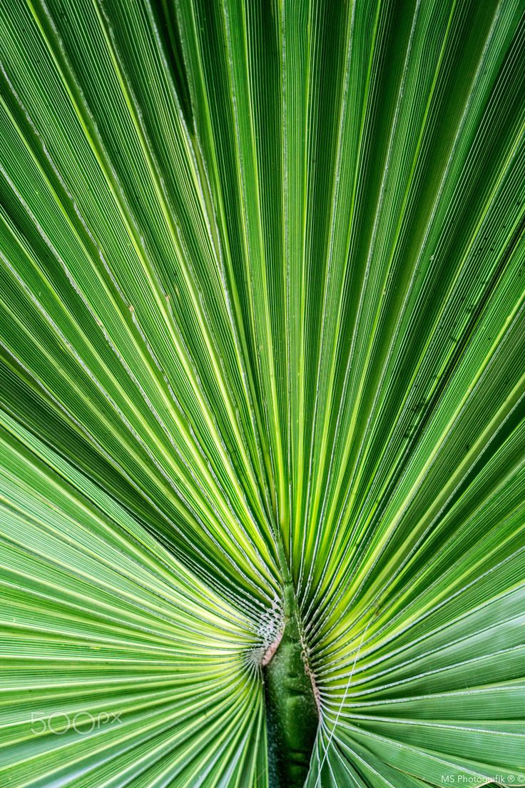 Palm Leave - null