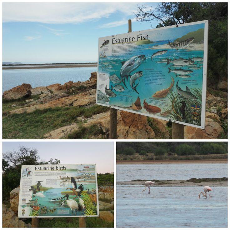 New Bird and Fish Boards down at Prawn Flats