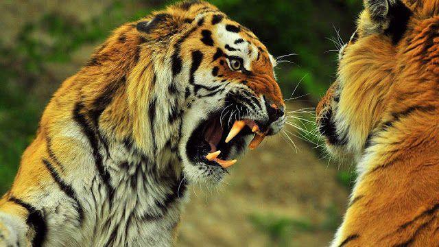 Tip Dan Teknik Terbaik Agar Kemarahan Terkendali