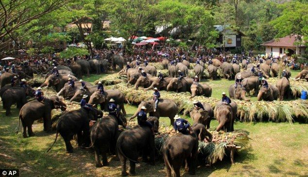 52 Thai elephants celebrate national day in their honour with all-you-can eat buffet
