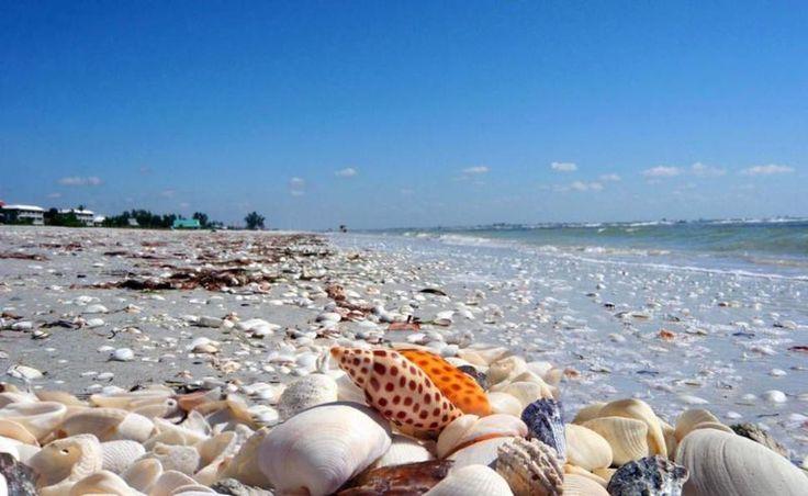 Sanibel Island, Florida, USA. Sanibel Island (Sanibel sziget) partjait nagy mennyiségben borítják tengeri kagylók ez vonzza a látogatókat. A nagy mennyiségű kagyló azért gyűlik itt össze mert amíg a legtöbb sziget észak-déli fekvésű addig a Sanibel sziget nyugat-keleti fekvésű és a déli oldal úgy viselkedik mint egy lapát és összegyűjti azokat a kagylókat amiket a Golf-áramlat magával hoz délről.