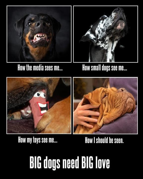BIG Dogs need BIG Love!!! ~ And I KNOW They Are GENTLE GIANTS!!!  All I see is Big Pups that needs lots of BIG LOVE- who could see anything else?